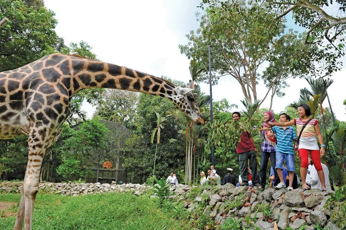 حديقة الحيوانات في مالاكا ماليزيا