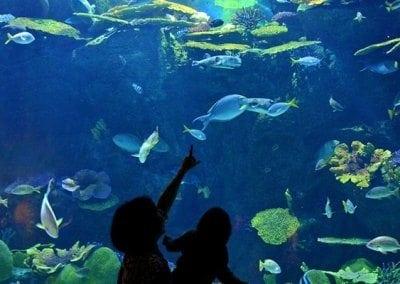 افضل الانشطة فى سي لايف بانكوك عالم المحيط  الجمل والاروع فى تايلاند