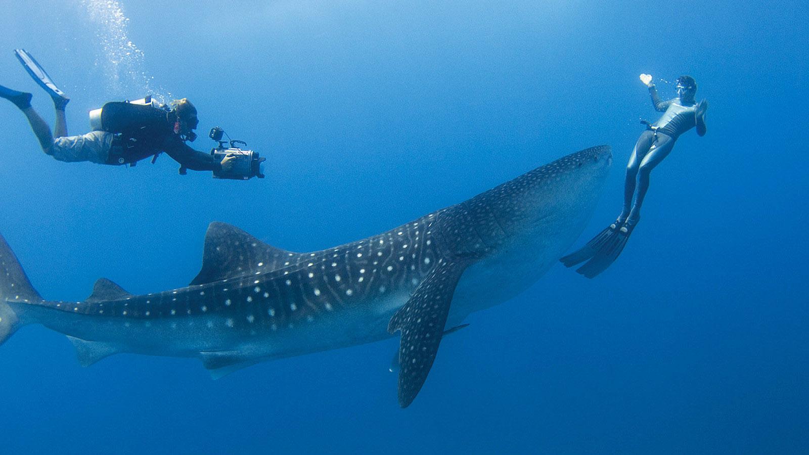 تعرف علي كيفيه الغوص في المالديف