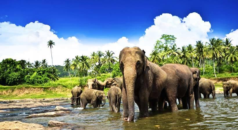 أفضل الانشطة في ميتم الفيلة في كاندي سريلانكا