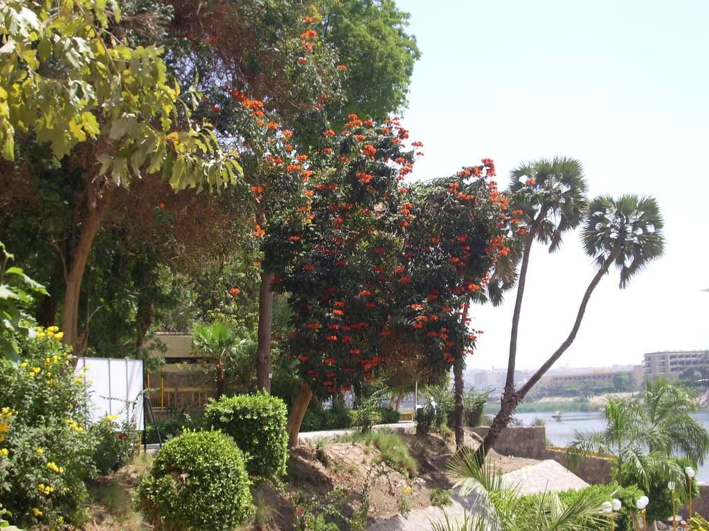 جزيرة النباتات أسوان