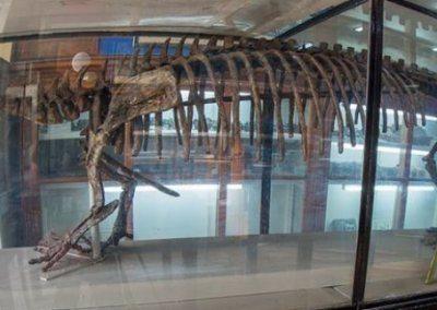 المتحف الجيولوجي المصري | اهم الانشطة فى المتحف الجيولوجى المصرى