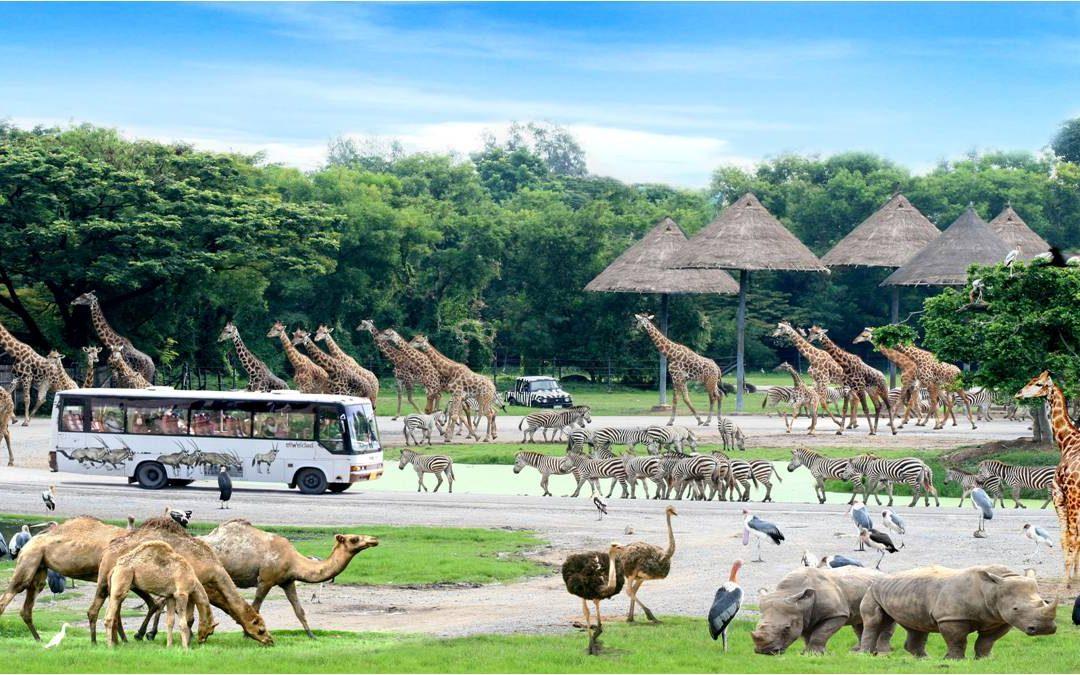 جولة سياحية في سفارى وورلد بانكوك
