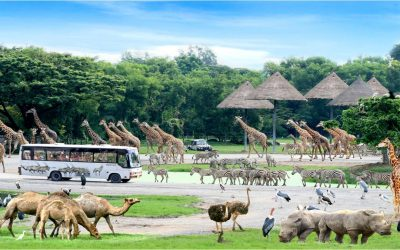 Safari World Tour Bangkok
