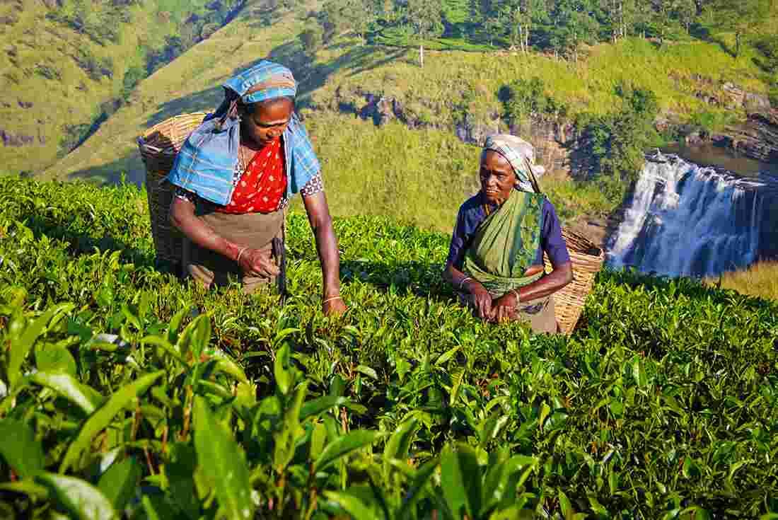 افضل واجمل 5 اماكن سياحية فى سريلانكا | تعرف على السياحة فى سريلانكا