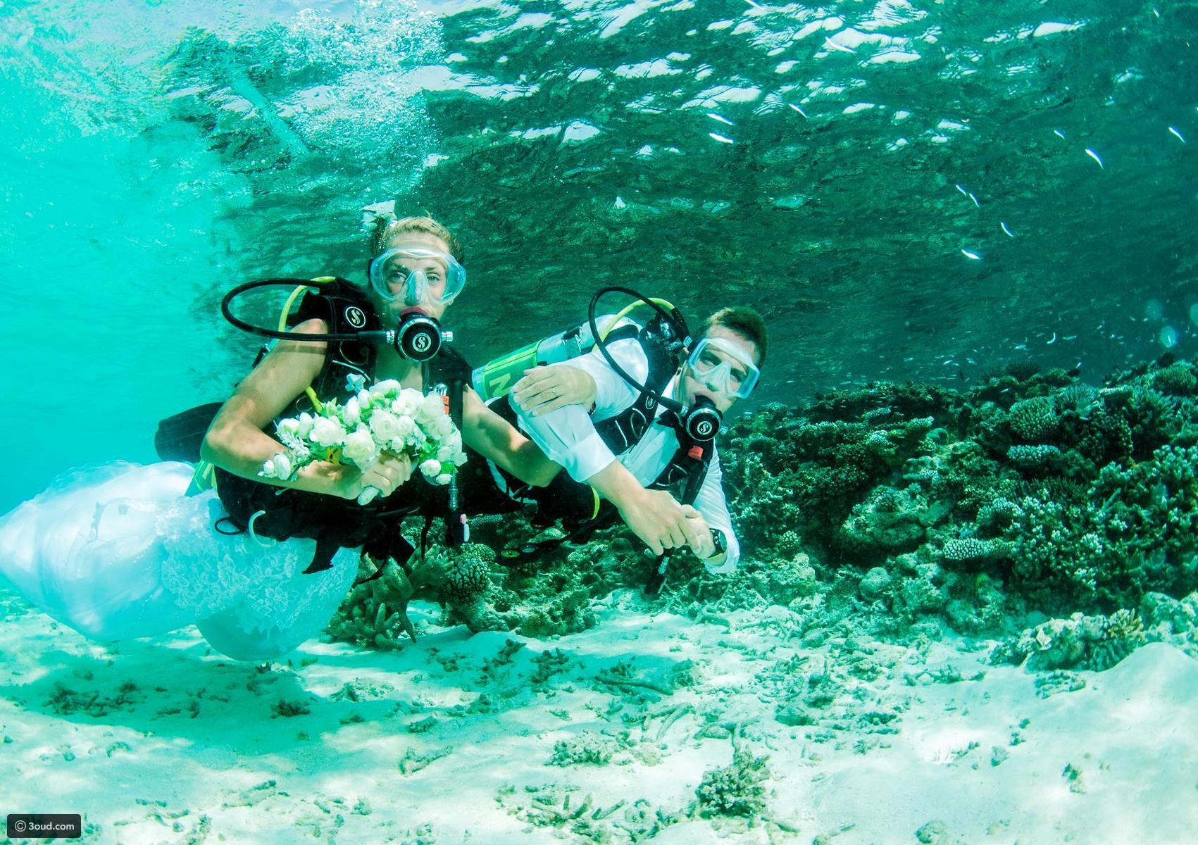 مغامرة السباحة مع قرش الحوت