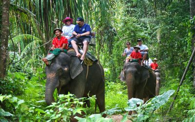 Tour of Bukit Safari