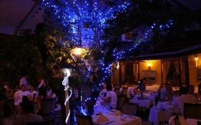 مطاعم المأكولات البحرية في أنقرة