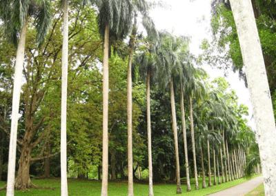 الحديقة النباتية الملكية فى كاندى من اجمل الاماكن السياحية الموجودة في المدينة السريلانكية