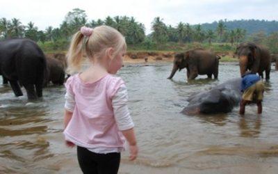 دار الفيلة الايتام فى كاندى