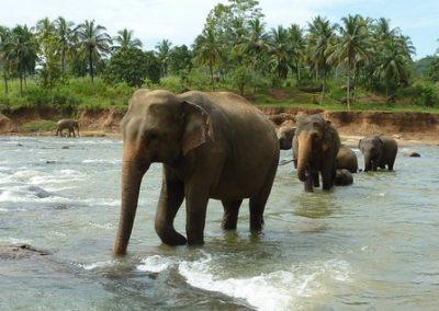 اهم الانشطه في دار الفيله الايتام في كاندي