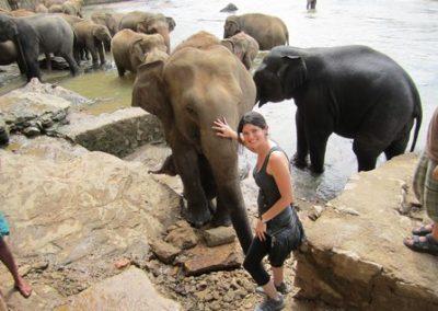 حديقة الفيلة فى كاندى