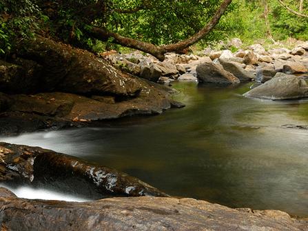 محمية غابة سينهاراجا