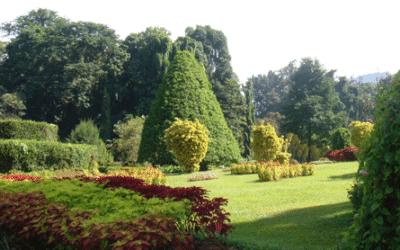 الحديقة النباتية فى كاندى