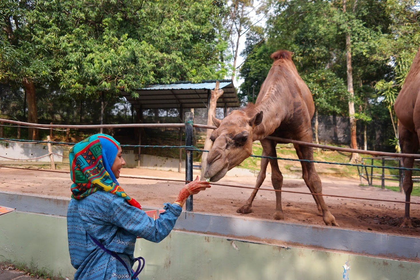 حديقة حيوان جوهور في ماليزيا